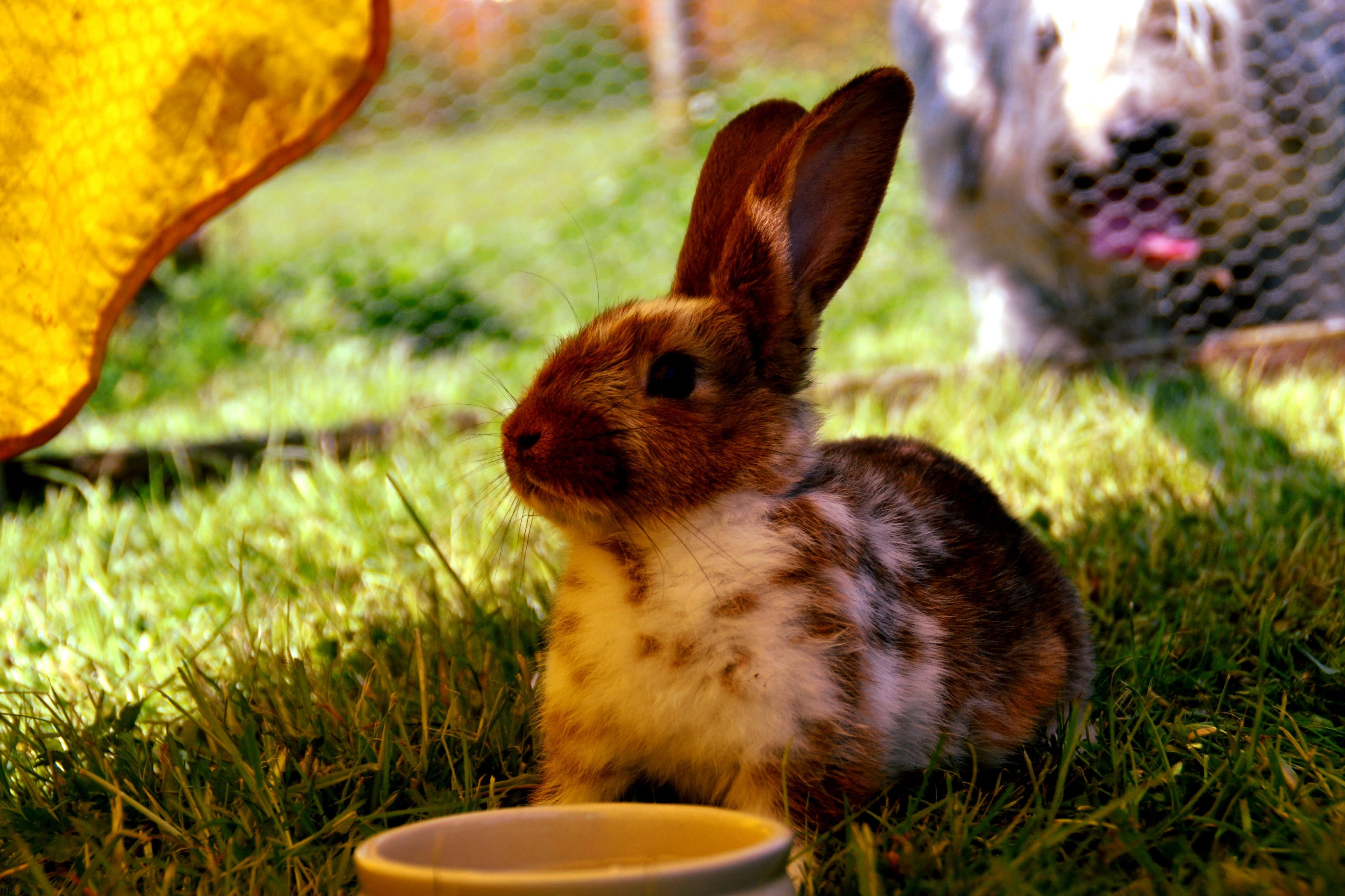 trucos Clínica veterinaria Caramuel para combatir el calor de tus mascotas